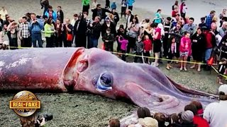 GIANT SQUID WASHES UP ON BEACH NZ