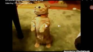 Afacan kediler