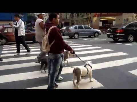 Caminata 28 de Julio por los Pitbull Argentina Buenos Aires Part3