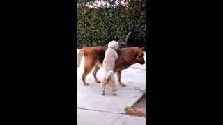 Dog Massages His Best Gal