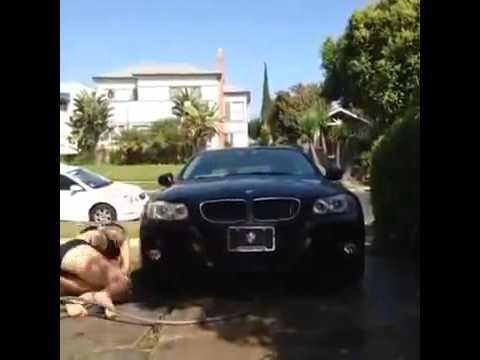 Avtomobil yuyarkən seksual görünməyə çalışan gənc qız rüsvay oldu