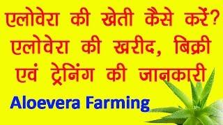एलोवेरा की खेती, पौधे की खरीद, बिक्री और ट्रेनिंग की जानकारी || How To Do Aloevera Farming?