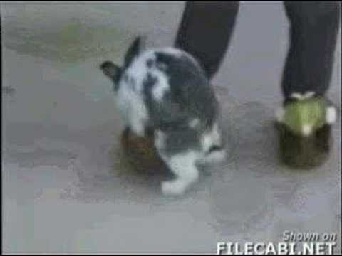 animal fuck