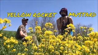 Metal Detecting In The Yellow Rocket Mustard