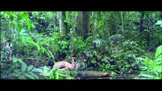 Pontianak vs Orang Minyak - Official Trailer [HD]