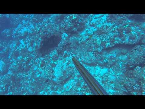 Hawaii Spearfishing The Super Secret Spot
