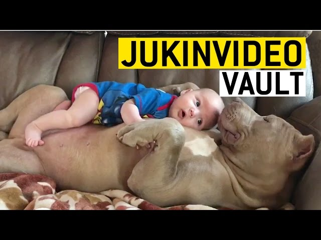 Human and Animal Friendships from the JukinVideo Vault