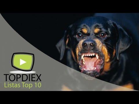 10 perros guardianes peligrosos