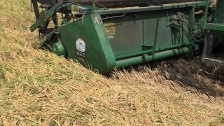 Downed Rice Loss Adjustment Training Video