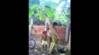 Comedy Funny Children Video Clip 2015 | YoungGirl Fight Banana Tree