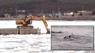 Brilliant Idea Frees Dolphins From Ice Jail