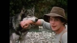 Comillo Blanco(White Fang - 1991 movie ) - scene