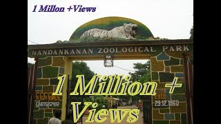 Nandankanan zoological park odisha | 2nd biggest zoo in India.