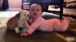 Sevimli hayvanlar ile şirin bebekler arasında geçen komik anlar :)