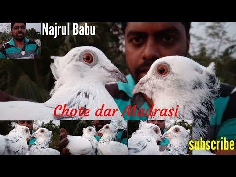 Xxx Mp4 Madrasi Chotti Dar Ak Pair Najrul Babu Ka By Raza Photography Technical 3gp Sex