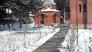 Gavrani i sove u parku