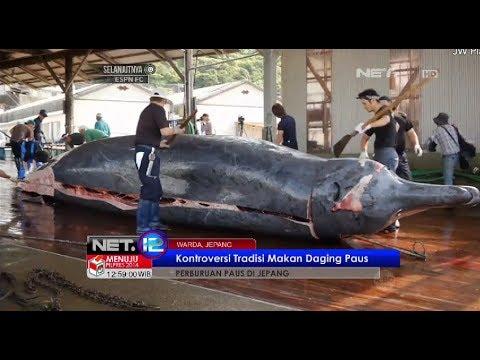 Pemburu paus di Wada Jepang kembali dengan tradisi mereka berburu paus - NET12
