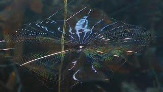 Spider Web Light Show