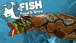 Giant Snakehead Eats Snapping Turtle! - Feed and Grow Fish Gameplay