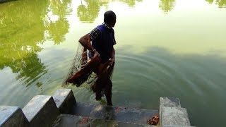 Net Fishing | Catching Fish With Cast Net | Net Fishing in the village (Part-206)