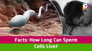 Facts: How Long Can Sperm Cells Live?