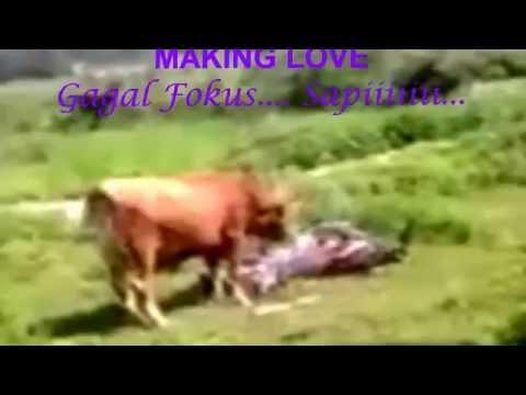 Xxx Mp4 Narsis Sapi Making Love Gagal Fokussss 3gp Sex