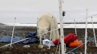 Spitzberg 2010 - rencontre avec ours polaire