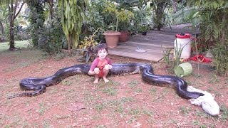 Giant Anaconda Captured After Eating Neighbour's Dog