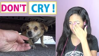 Try Not To Cry: How a little microchip changed this DOG