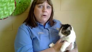 San Diego Animal Adoptions on The TSDn