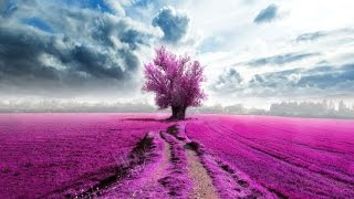 Reiki Meditation Music, Relax Music, Music for Stress Relief, Soft Music, Background Music, ☯2824