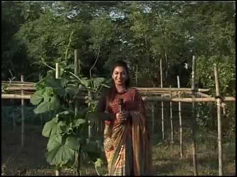 Banglar Krishi 81(Misro Bagan, Kathalar Rong,Deshi projatir Mas.flv)
