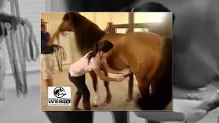 Horse and Girl born love, Animals breeding and Woman - Funny video 2016