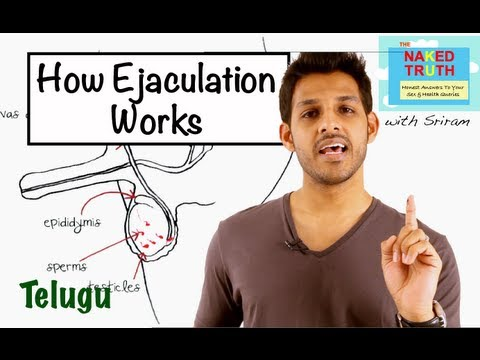 How Ejaculation Works - Telugu