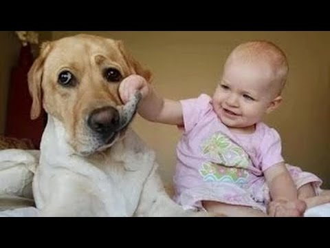 Videos de risa de bebes Se ríen de los perros