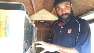 How to: Pigeon Loft Cleaning & Torching Racing Pigeons Tippler & Fancy Pigeons