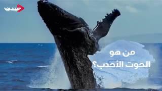 من هو الحوت الأحدب؟