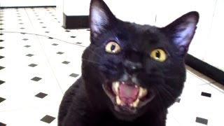 Talking Kitty Cat 26 - No Pets Allowed