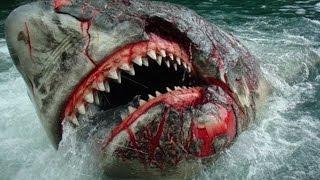 Tiburones Más Peligrosos Y Agresivos | TOP 10