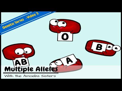Multiple Alleles (ABO Blood Types) and Punnett Squares