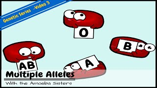 Multiple Alleles (ABO Blood Types) and Punnett Squares