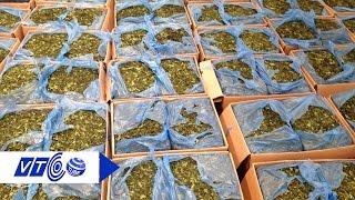 Đọc báo 06.06.2016: Hàng tấn lá ma túy cực độc núp bóng lá chè bị thu giữ | VTC