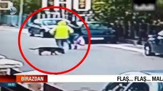 Kahraman Köpek kadını kurtardı!