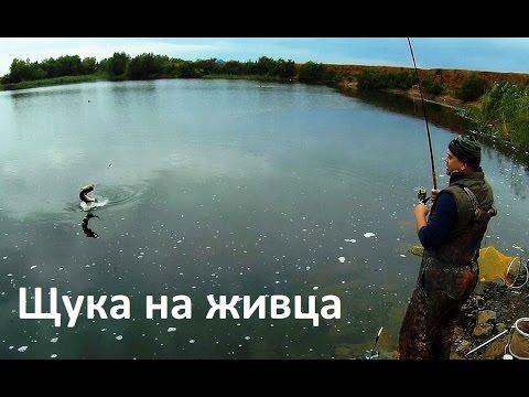 где расставлять ловушки  живца русская