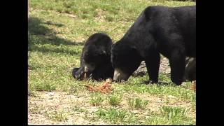 Losing You - Sad song, Cute bear cubs