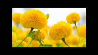 Shova Tomar Bhalo Basa=[Sad verson]=Singer=Andrew Kishor & others