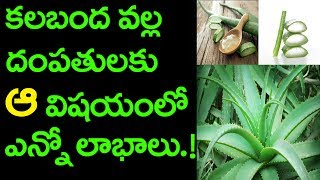 Natural Tips and Health Benefits of Alovera Juice in Telugu | Friday Poster