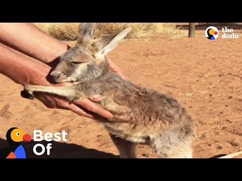 Xxx Mp4 Wild Baby Animal Rescues That Will Make You Smile Compilation The Dodo Best Of 3gp Sex