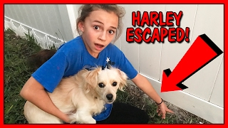 WE ALMOST LOST OUR PUPPY! | We Are The Davises