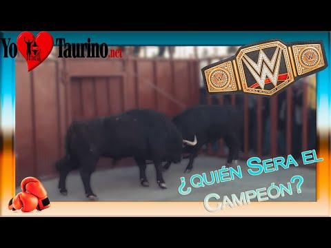 Toro empotra a toro en el toril 3º Toro de San Blas de Viana de Cega por YoTaurino enero 2015.